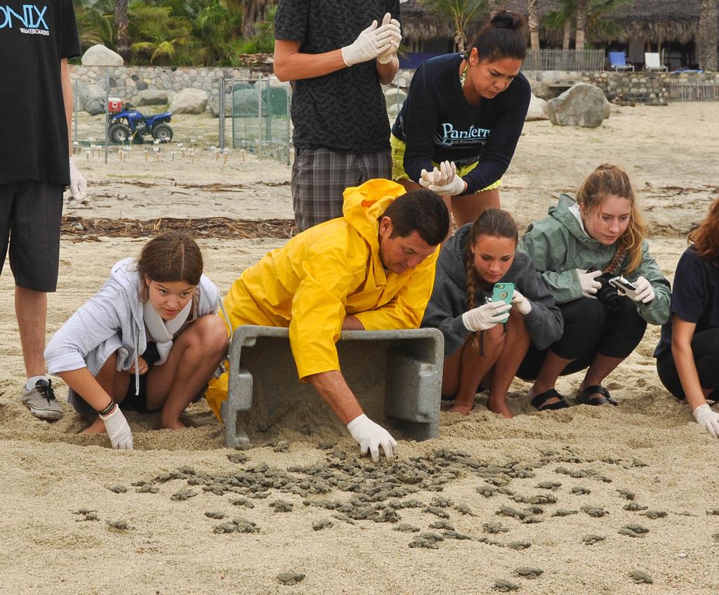 Sea Turtle Hatchling Adventure