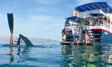 Summer Cruising Baja Style